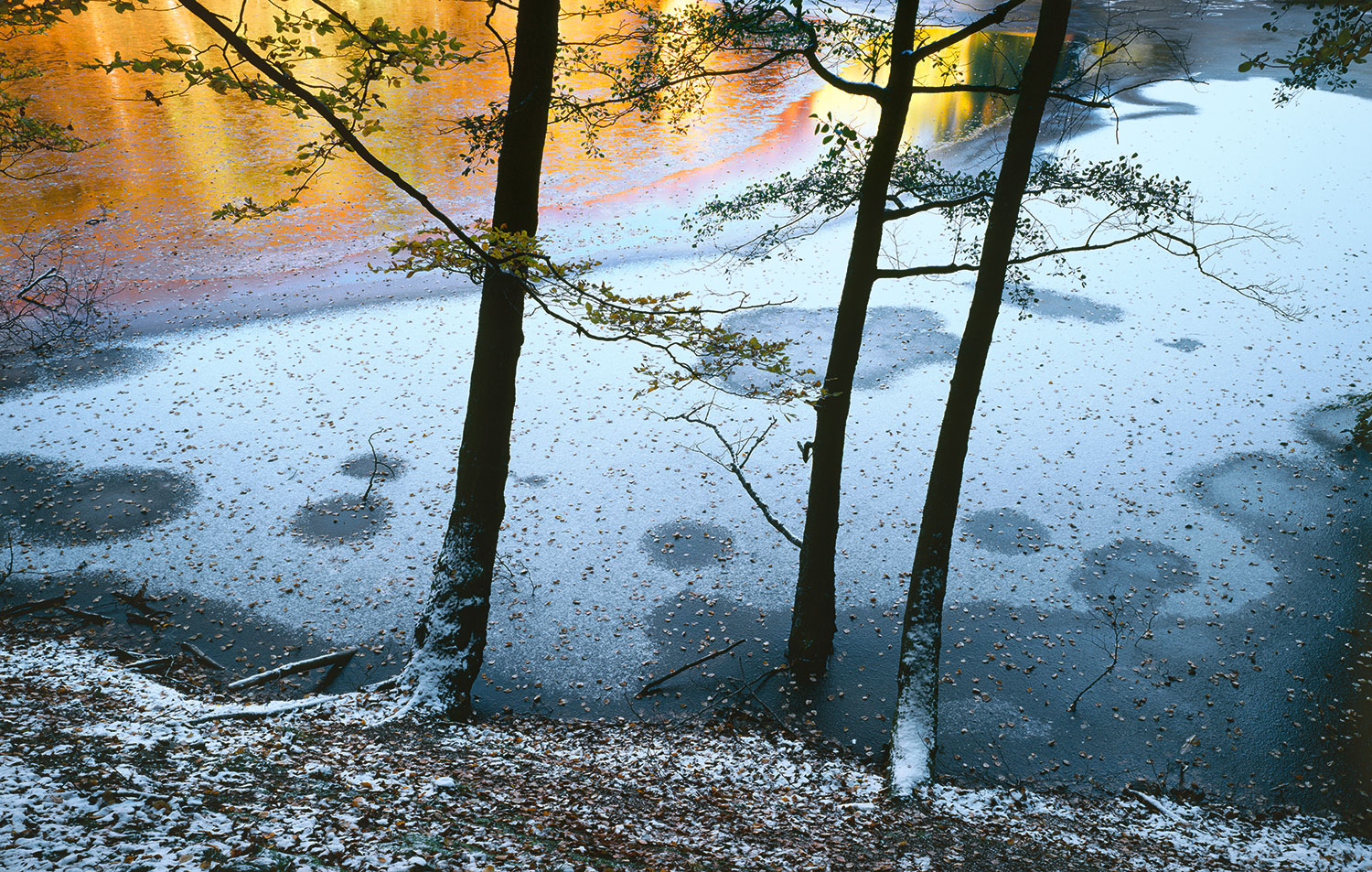 image of Northern Beech and reflected light, Sweden