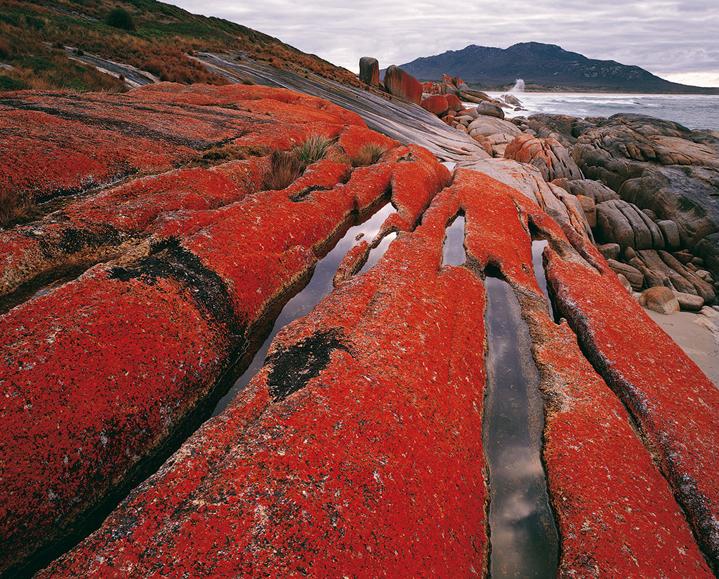 image of Lichened pavements, Furneaux Islands, Tasmania